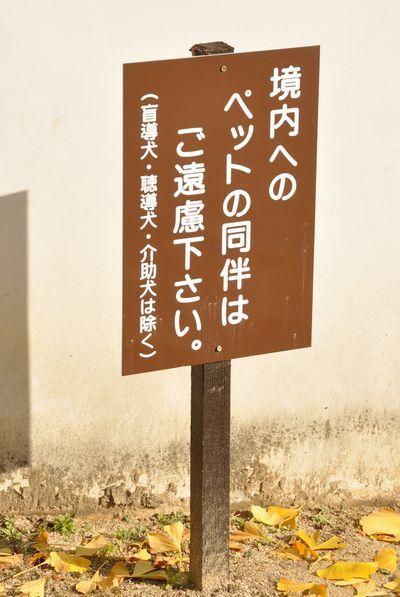 2010_0682.jpg