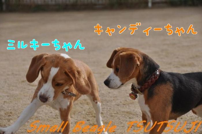 キャンディーちゃん.jpg