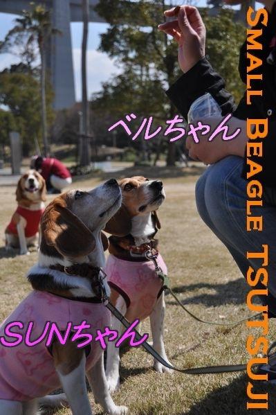 SUNちゃん.jpg